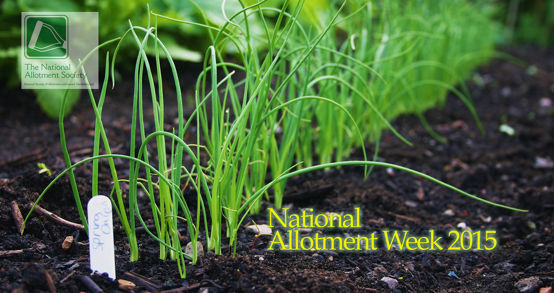 National Allotment Society, National Allotment Week, Spring Onions growing in the grownd.