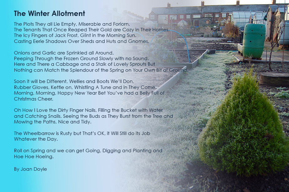 The Winter Allotment Poem