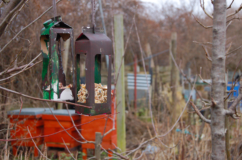 Juice cartain bird feeder hanging from a tree branch.