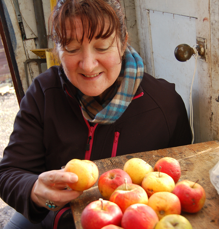 Jan Bentley sorting apples in the shed