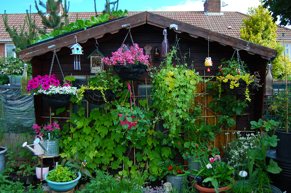 Allotment Shed with hangging baskets and potted of flowers